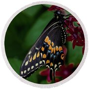Round Beach Towel featuring the photograph Black Swallowtail Butterfly by Jay Stockhaus