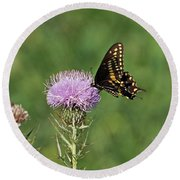 Round Beach Towel featuring the photograph Black Swallowtail Butterfly by Sandy Keeton