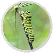Black Swallowtail Caterpillar Round Beach Towel by Debbie Green