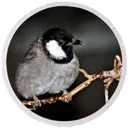 Round Beach Towel featuring the photograph Black Throated Laughing  Thrush by Elaine Manley