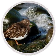 Black Turnstone Round Beach Towel