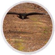 Round Beach Towel featuring the digital art Black Vulture In Flight by Chris Flees