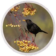 Blackbird Yellow Berries Round Beach Towel