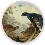 Blackgame Or Black Grouse Round Beach Towel by Archibald Thorburn