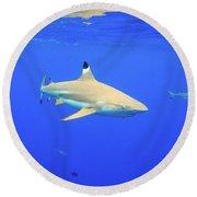 Blacktip Reef Shark Round Beach Towel