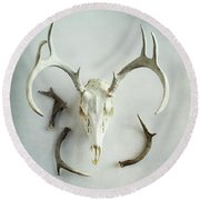 Bleached Stag Skull Round Beach Towel by Stephanie Frey