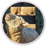 Bleating Sheep Round Beach Towel
