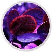 Bleeding Violet Smoke Bush Leaves - Pantone Violet Ec Round Beach Towel