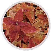 Blood-orange Coleus Round Beach Towel