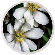 Round Beach Towel featuring the photograph Bloodroot In Bloom by Thomas R Fletcher
