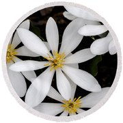 Sanguinaria Round Beach Towel by Skip Tribby