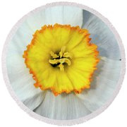 Bloom Of Narcissus Round Beach Towel by Michal Boubin
