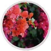 Blooming Bougainvillea- Photography By Linda Woods Round Beach Towel