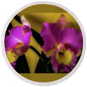 Blooming Cattleya Orchids Round Beach Towel