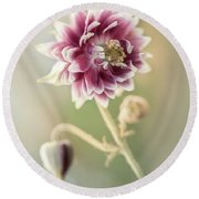 Blooming Columbine Flower Round Beach Towel