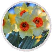 Blooming Daffodils Round Beach Towel
