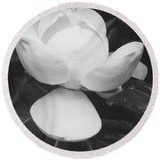 Blooming Magnolia- Art By Linda Woods Round Beach Towel