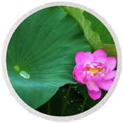 Blooming Pink And Yellow Lotus Lily Round Beach Towel