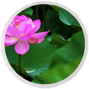 Blooming Pink Lotus Lily Round Beach Towel
