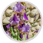 Round Beach Towel featuring the photograph Blooming Purple Iris by Sue Smith