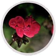 Blooming Red Geranium Round Beach Towel