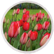 Blooming Red Tulips Round Beach Towel