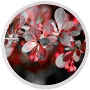 Round Beach Towel featuring the photograph Blooming Spring by Jerry Sodorff