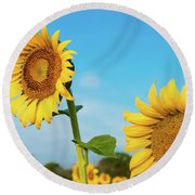 Blooming Sunflower In Blue Sky Round Beach Towel