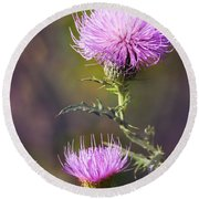 Blooming Thistle Round Beach Towel