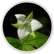 Round Beach Towel featuring the photograph Blooming Trillium by Mike Eingle