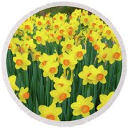 Blooming Yellow Daffodils Round Beach Towel