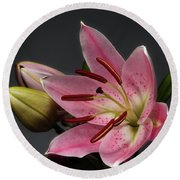 Blossoming Pink Lily Flower On Dark Background Round Beach Towel
