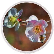 Blossoming Quince - Breakfast At The Gardens 002 Round Beach Towel