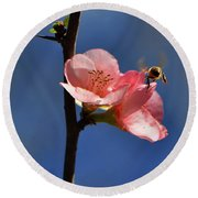 Blossoming Quince - Breakfast At The Gardens 003 Round Beach Towel