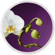 Blossoming White Orchid On Purple Background Round Beach Towel