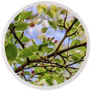 Blossoms And Leaves Round Beach Towel
