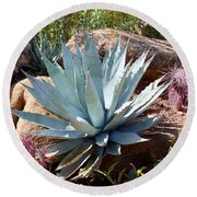 Round Beach Towel featuring the photograph Blue Agave by Kathryn Meyer