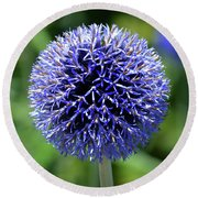 Round Beach Towel featuring the photograph Blue Allium by Terence Davis