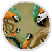 Blue And Gold Macaw Parrot Abstract Round Beach Towel