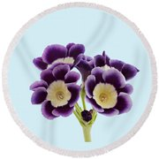 Blue Auricula On A Transparent Background Round Beach Towel