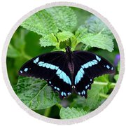 Blue Banded Swallowtail Butterfly Round Beach Towel