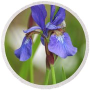 Round Beach Towel featuring the photograph Blue Bearded Iris by Brenda Jacobs
