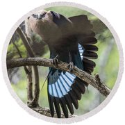 Blue Bellied Roller Stretching His Flight Feathers Round Beach Towel