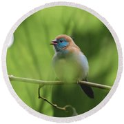Round Beach Towel featuring the photograph Blue Bird Chirping by Raphael Lopez