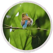 Round Beach Towel featuring the photograph Blue Bird Has An Itch by Raphael Lopez