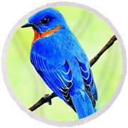 Blue Bird King Round Beach Towel