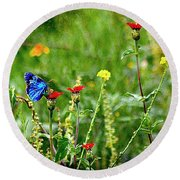 Blue Butterfly In Meadow Round Beach Towel by John  Kolenberg