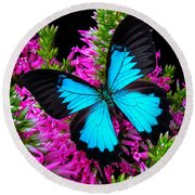 Blue Butterfly On Heather Round Beach Towel