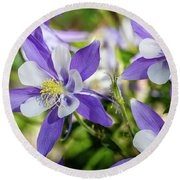 Blue Columbine Wildflowers Round Beach Towel by Teri Virbickis