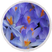 Blue Crocuses Round Beach Towel